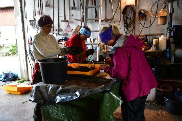 Marktelling i jordblokker (Foto: Ane Harestad)