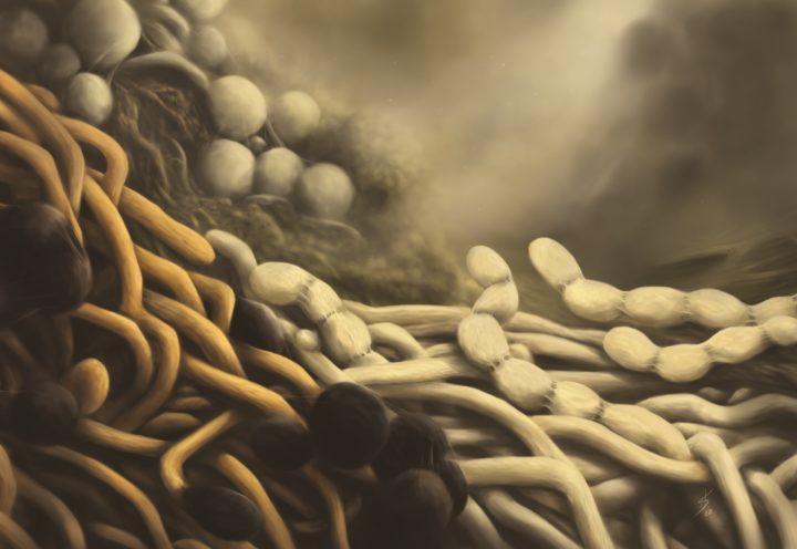 Illustrasjon av Actinobacteria (Foto: Katelyn Solbakk)