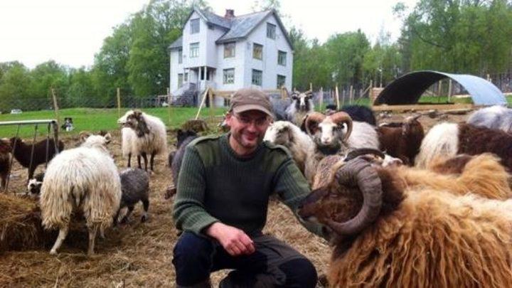 Arnar Lycke med sauene (Foto: Gunnar Sandvik, NRK Møre og Romsdal )