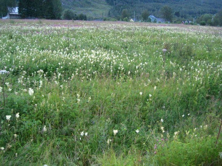Store jordbruksareal ligger brakk og gror igjen (Foto: Rose Bergslid)