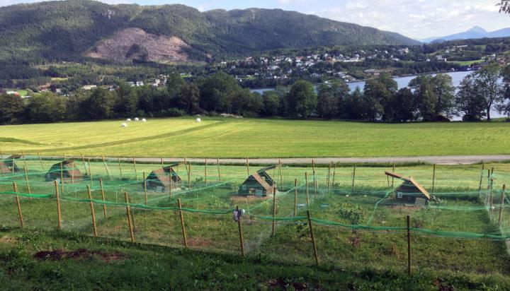 Noen av husene og uteområdene i forsøket på Tingvoll gard. (Foto: Steffen Adler )
