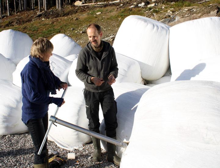 Rose Bergslid, NORSØK og Matthias Koesling, NIBIO tar prøver av fôr. (Foto: Sissel Hansen, NORSØK)