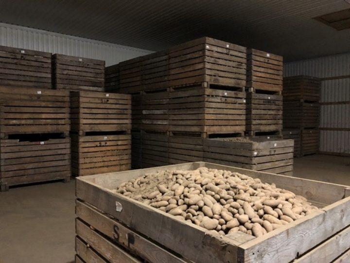 Potatoe Storage At Sunndalspotet As I (Photo: Tatiana Rittl)