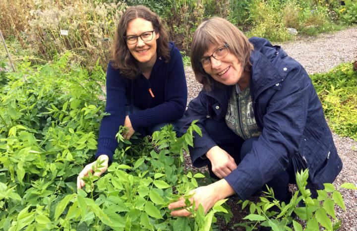 Forskerene Randi Berland Frøseth og Sissel Hansen har sett på hvordan en kan bedre jordfruktbarheten i økologisk jordbruk og samtidig redusere tap av nitrogen til miljøet. (Foto: Anita Land)