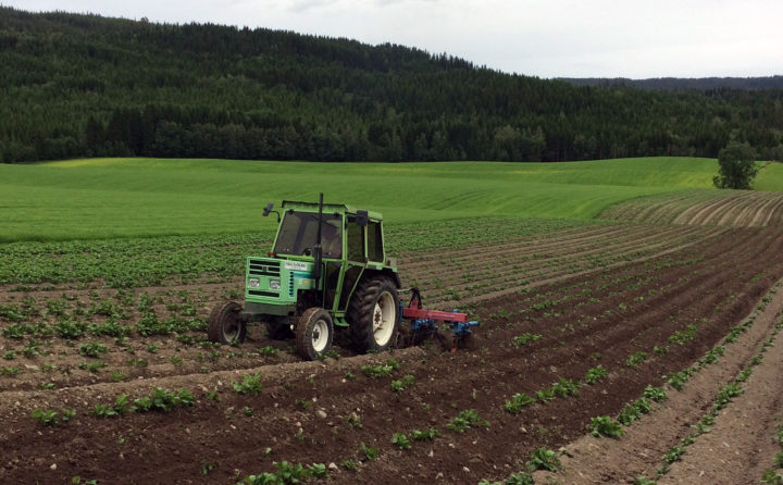 Ugraskontroll og hypping av potet. (Foto: Anne-Kristin Løes)