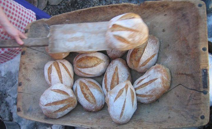 Hvete med mye gluten gir rask heving og luftige brød. Men det kan by på mageproblemer. Da kan de gamle kornsortene være en bedre løsning. (Foto: Eva Narten Høberg, NIBIO)