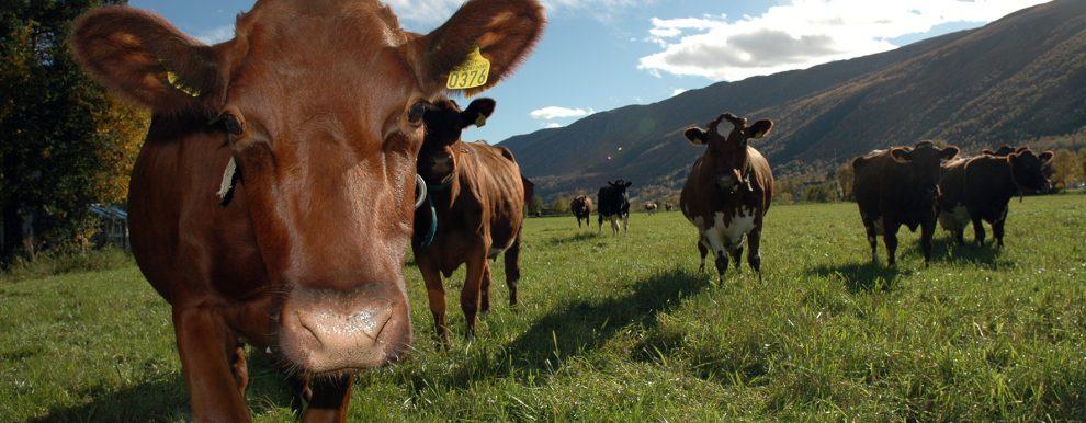 Det er store variasjoner mellom både økologiske og konvensjonelle gårdsbruk. (Foto: Jon Schärer )