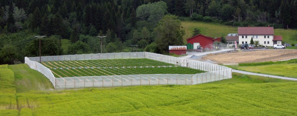Fence Trap Aw (Photo: Atle Wibe)