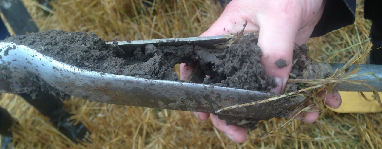 We investigate soil structure, carbon storage and cereals with and without ley in the crop rotation (Photo: Reidun Pommeresche)