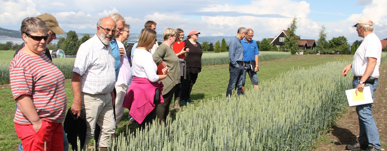 John Arne Dieseth i Graminor viste et stort mangfold av hvetesorter. (Foto: Eva Pauline Hedegart, NLR)