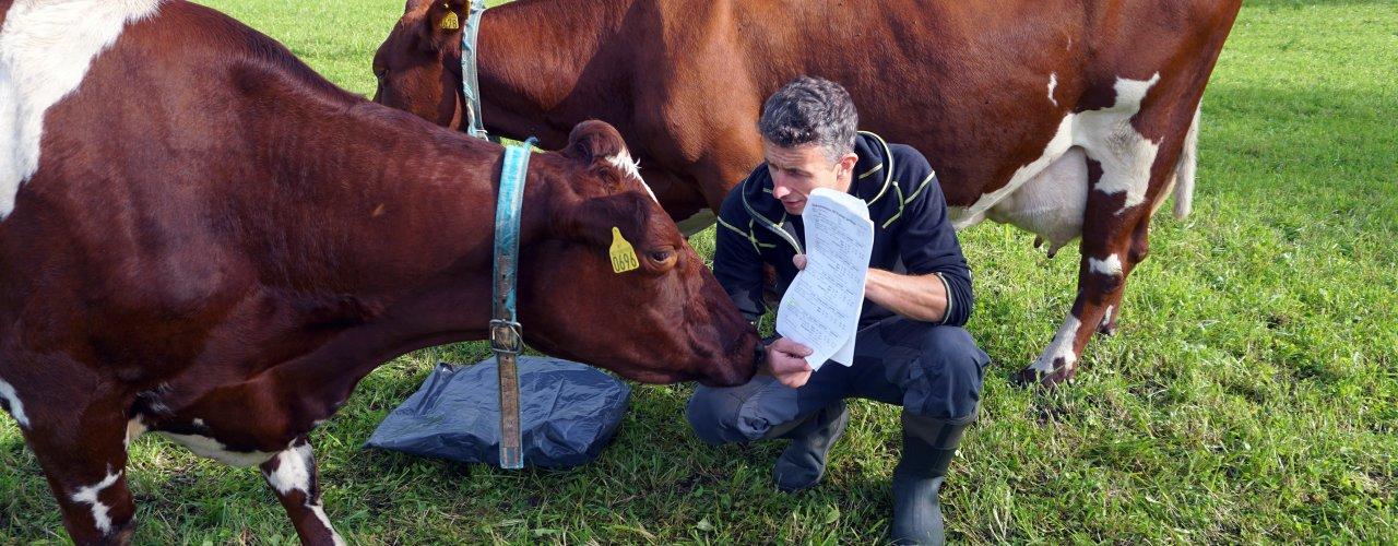 Rapport Ku Foto Sissel (Foto: Sissel Hansen)