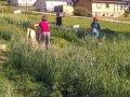 Høstin Av Korn Restor Foto Akl (Photo: Anne-Kristin Løes)