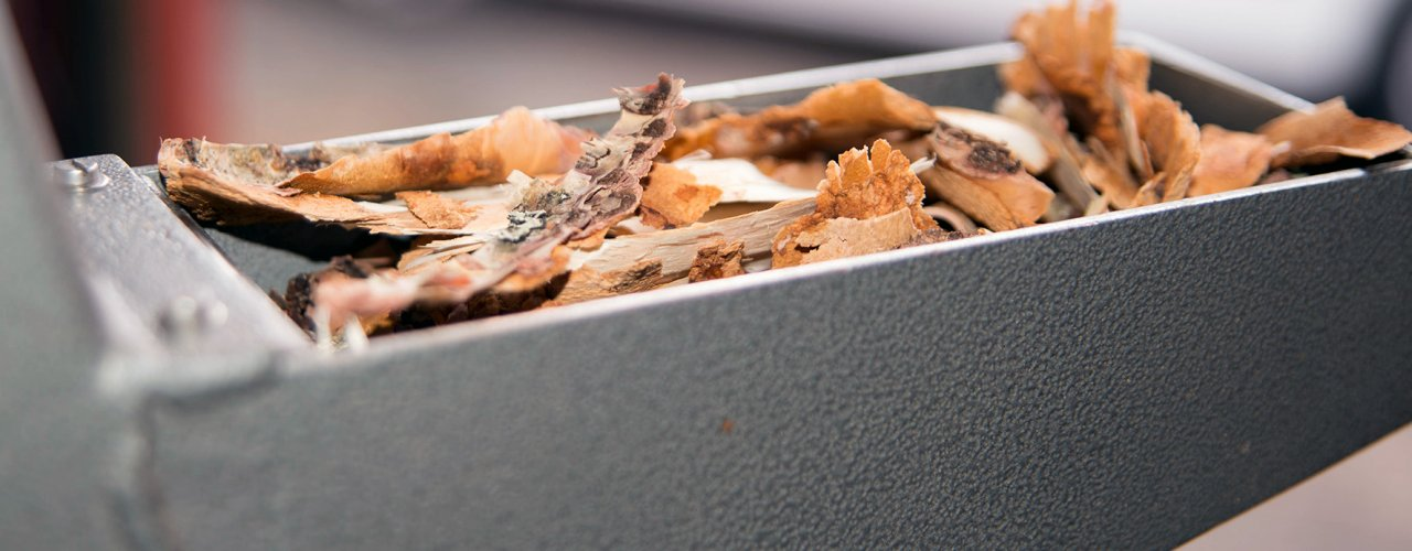 Bark inneheld tanninar (garvestoff). Er det mulig å utnytte dette som middel mot mage- og tarmparasittar hos drøvtyggarar? (Foto: Olaf Østbø. NIBIO)