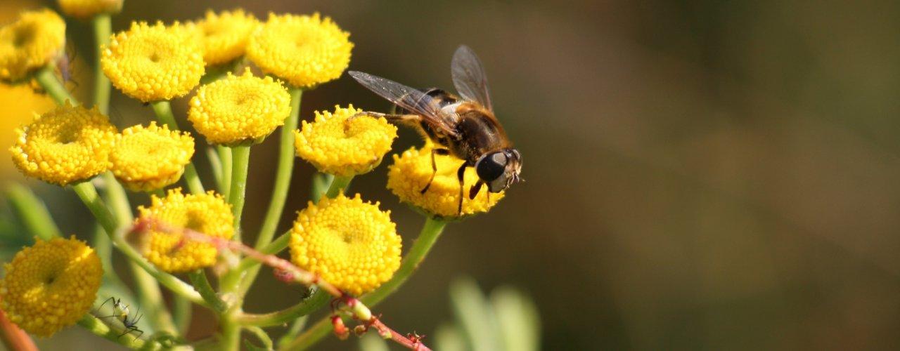 Beespoke Heading (Foto: Atle Wibe)
