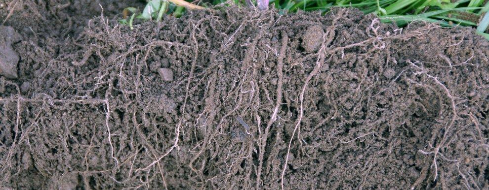 1 Godt Etablert Fangvekst Grynstruktur I Sand (Foto: Reidun Pommereche)