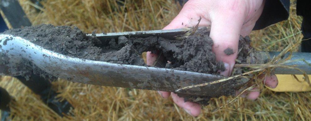Vi undersøker jordstruktur, karbonlagring og kornvekst med og uten eng i vekstskiftet (Foto: Reidun Pommeresche)