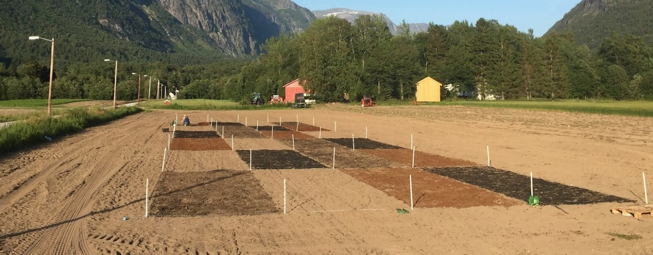 Overview of the field experiment. Treatments in the front from left to right: solid digestate, control (none), horse manure and biochar mixed with liquid digestate.  (Foto: Tatiana Rittl)