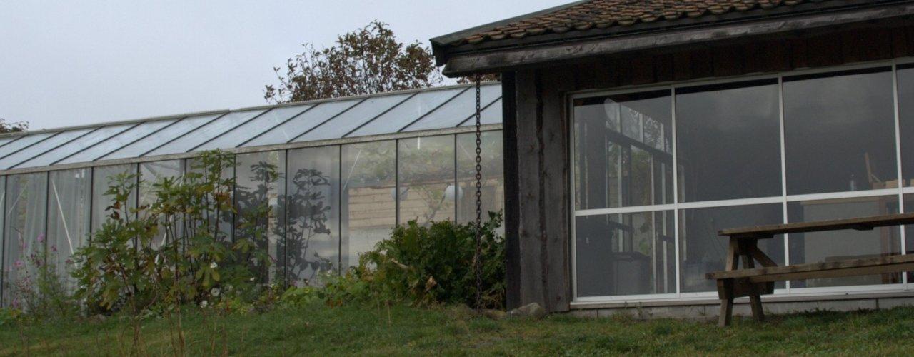 Økologisk veksthusproduksjon under omstilling. (Foto: Susanne Friis Pedersen)