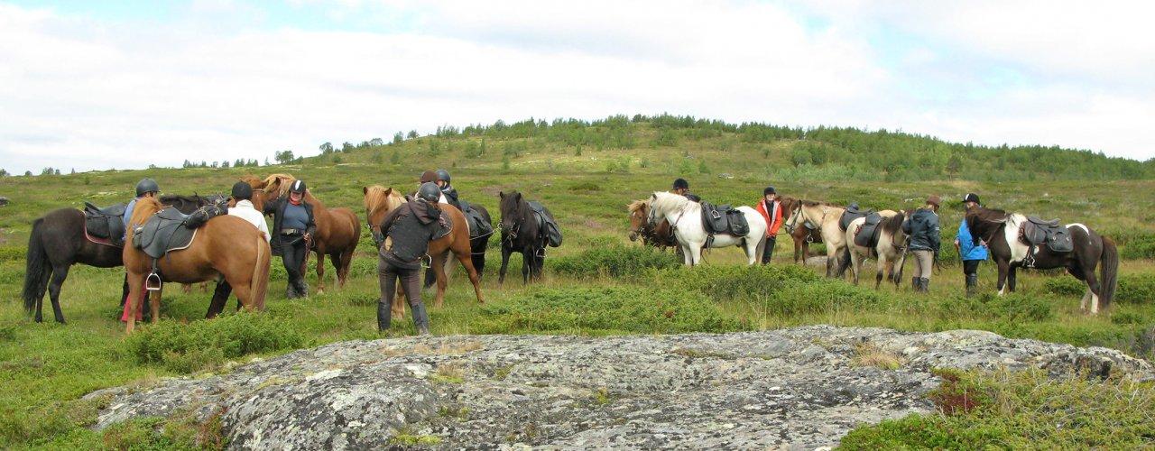 Hest  Img 8258 (Photo: Anita Land)