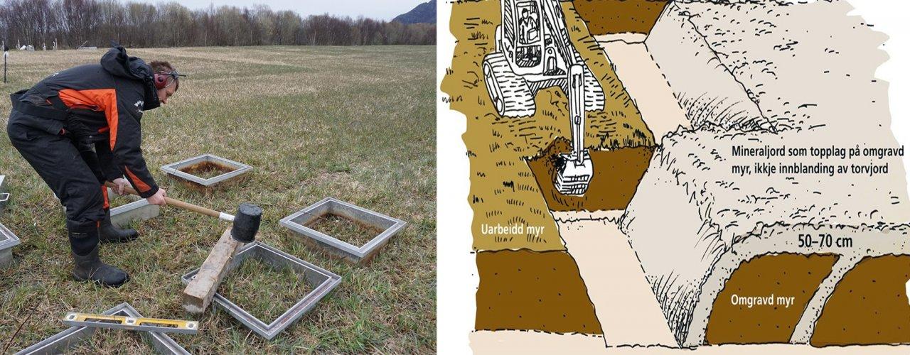 Til venstre: Sverre Heggset, Landbruk Nordvest slår ned rammer til måling av utslepp av drivhusgassane metan og lystgass. Til høgre: Skisse for omgraving av myr (Foto: Sissel Hansen. Tekning: Madlen Berent)