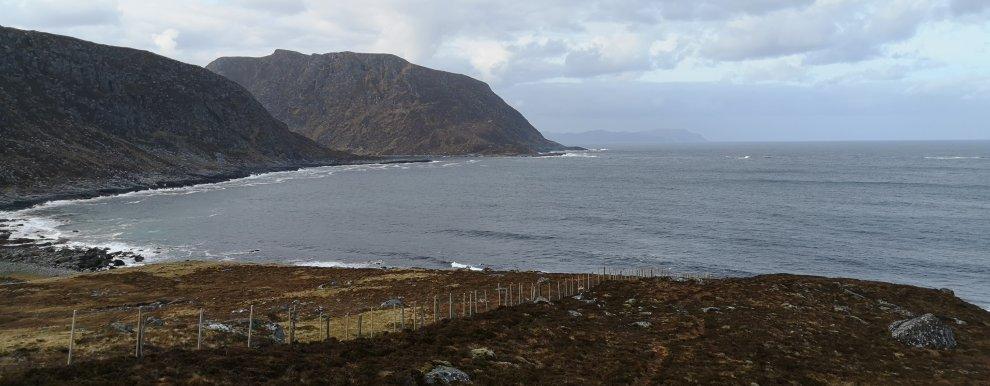 NYE BEITEOMRÅDER: Forskningsfelt på Nerlandsøya i Herøy kommune